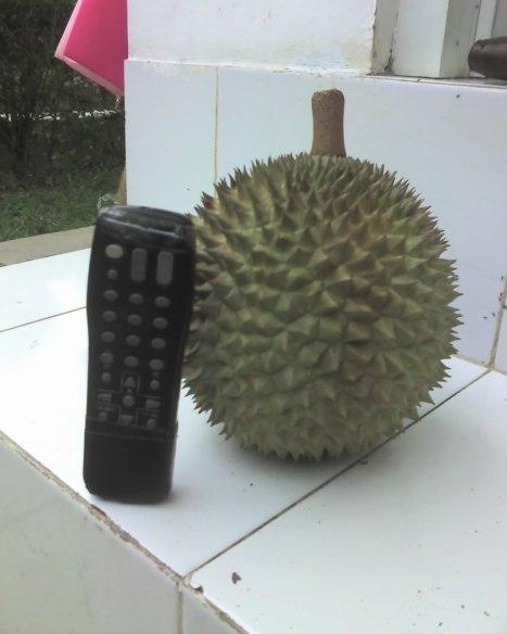 Durian masak pohon Rp. 25ribu, asli Patuk GunungKidul