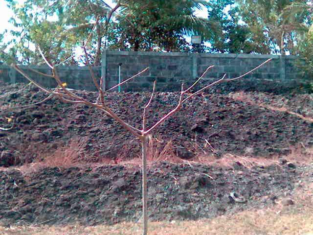 benteng batuan alam yang menghambat sinyal HP